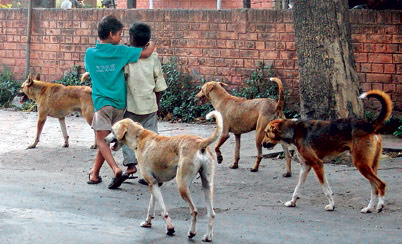 sp-stray-dogs_112814125131